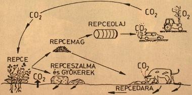 A sz�n-dioxid k�rforg�sa repceolaj el��ll�t�sa �s motorikus felhaszn�l�sa folyam�n